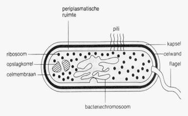 Een bacterie.