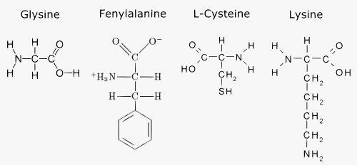 Enkele aminozuren.