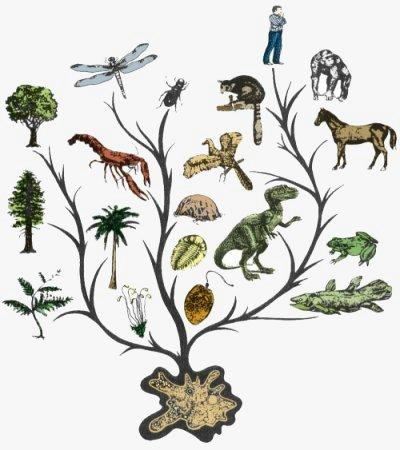 Evolutie 1