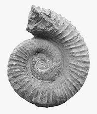 Fossiel3