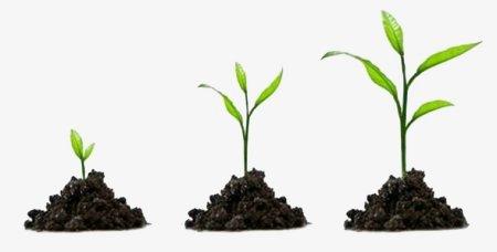 """""""Hebben jullie nagedacht over wat jullie (aan gewassen) bebouwen? Laten jullie het groeien of zijn Wij Degenen Die het laten groeien?"""" [Soerat al-Waaqi'ah (56), aayah 63-64.]"""