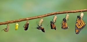 Metamorfose: van rups tot vlinder.