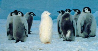 Een pinguïn heeft zijn kleur 'verloren'.