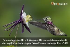 Klik op de afbeelding om het vergroot weer te geven. Gebruik de afbeelding voor da'wah.