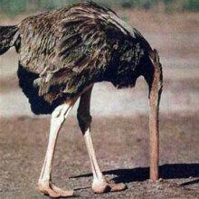 Kinderen struisvogel