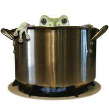 kikker-in-een-pan-kl